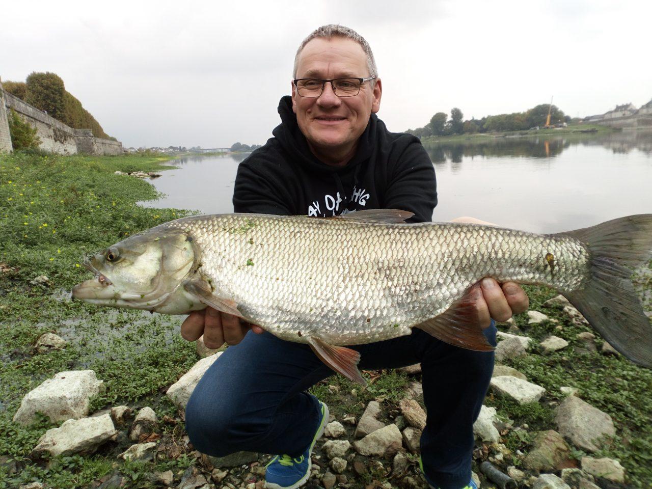 Bel aspe pris au leurre par un pêcheur