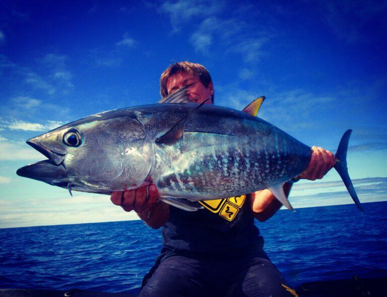 La pêche du thon rouge sur chasses aux leurres sur la Côte Aquitaine.