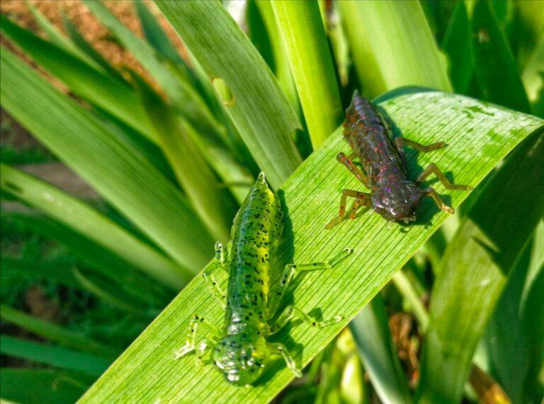 Grosses perches à l'insecte
